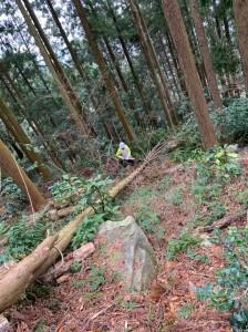 森林整備20200112_200117_0002